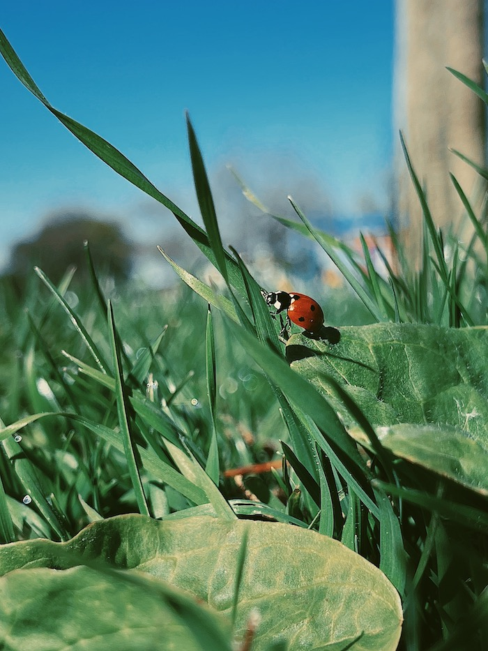 photo of ladybug on blade of grass